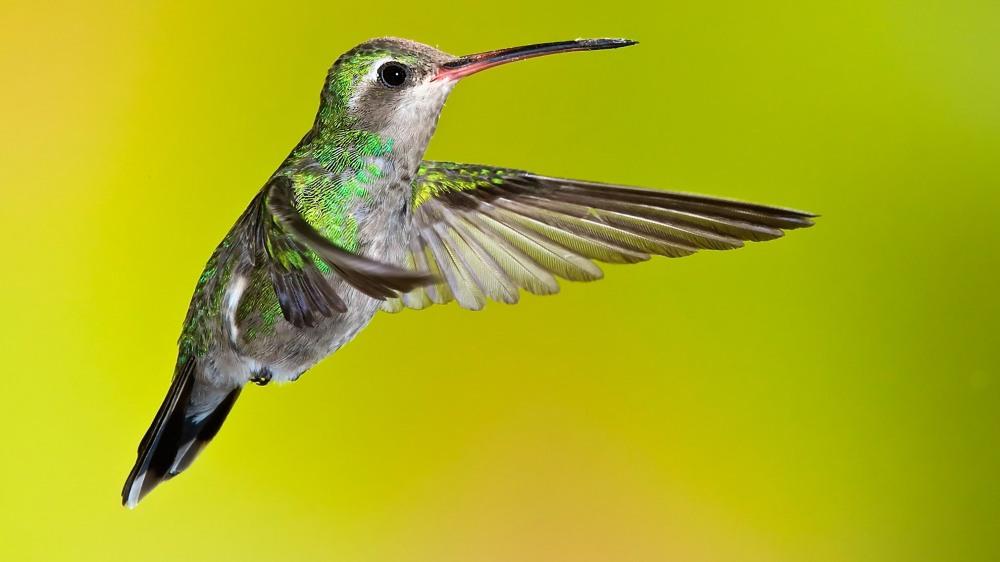 Hummingbird 2 Copyright Scott Bourne