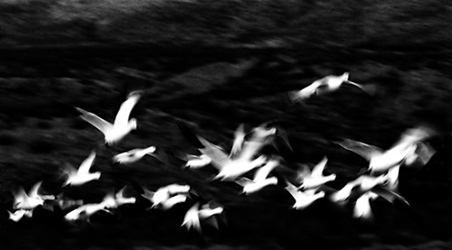 birdnight