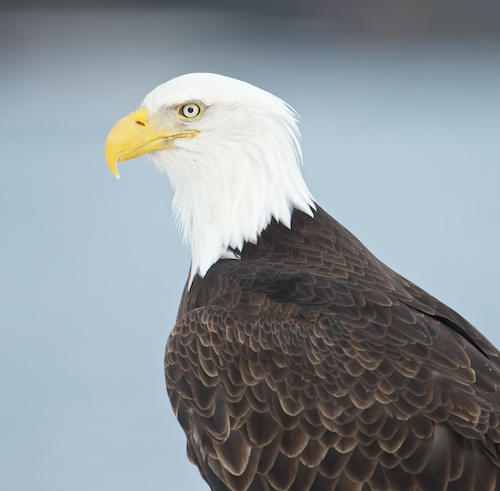 Eagle's head does not merge with horizon - makes it salable.