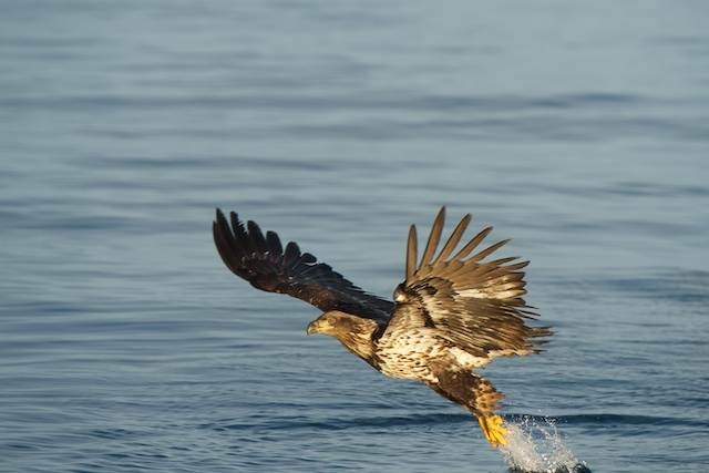 Eagle too low in frame.