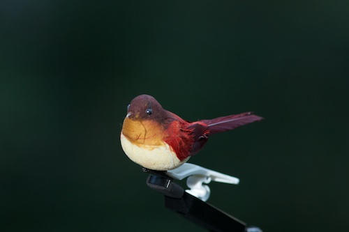 Don't laugh - this was our practice bird. We used him to set up our lights and test exposure.