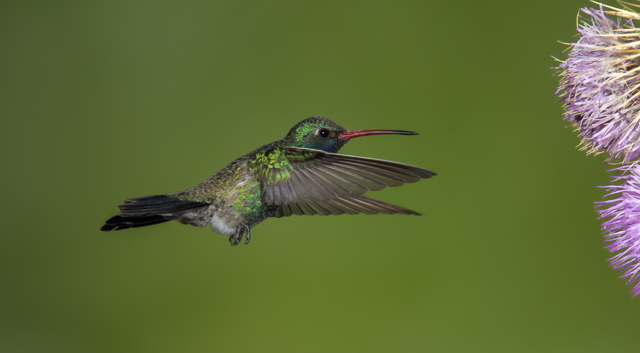 Photo by Scott Bourne – Attribution-NonCommercial-NoDerivs Creative Commons