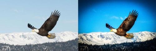 eagle_tonemapped