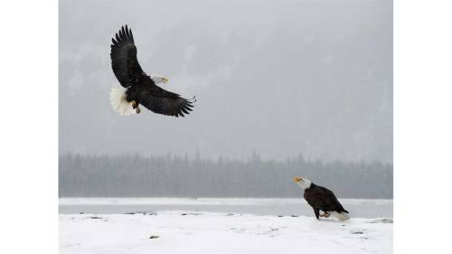 eagleswinter