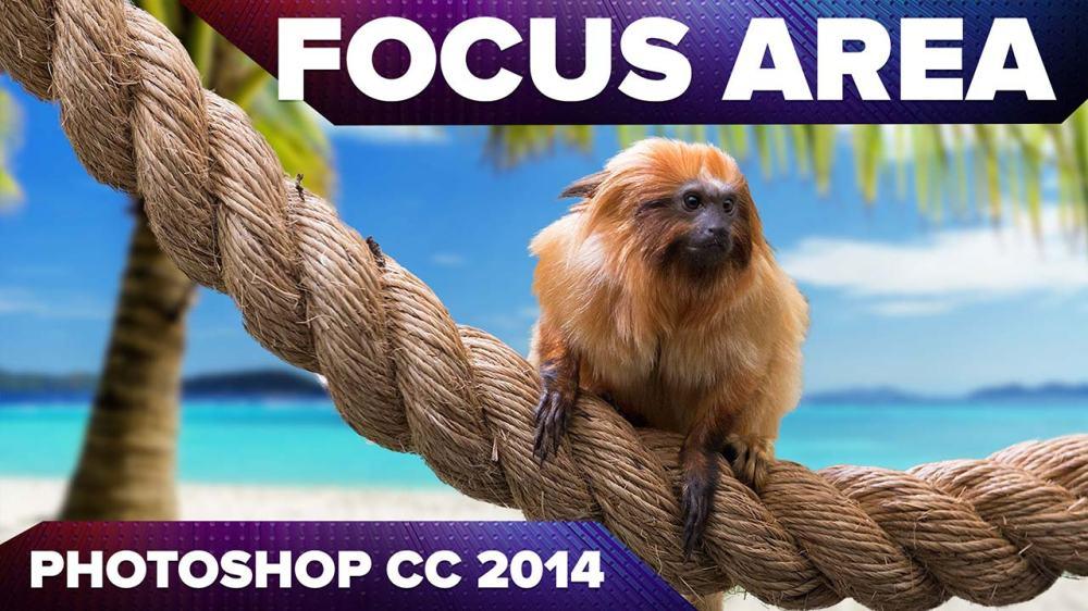 focusarea_1280