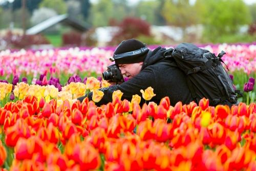 tulips-3266