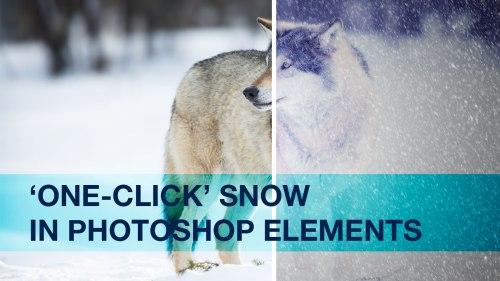 PhotoFocus-Header2