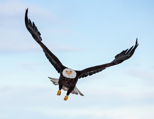 Eagles by Scott Bourne f/5.6 (wide open on 800mm f.5.6 lens)