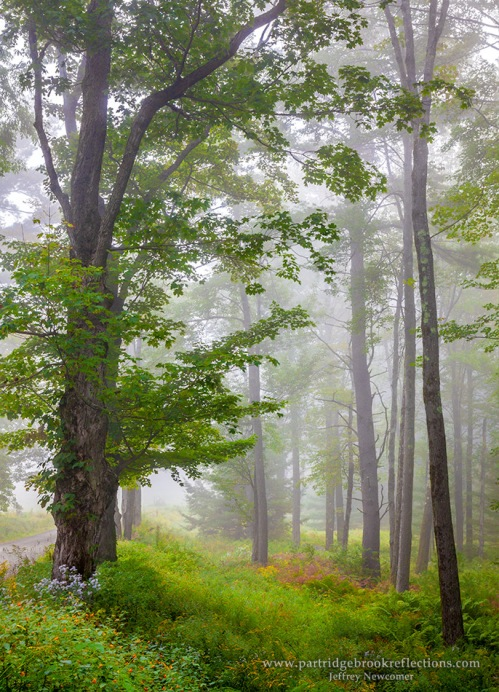 September Mist by Jeffrey Newcomer