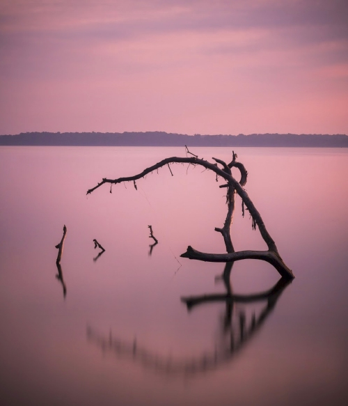 Dead Tree Long Exposure by Jim Denham