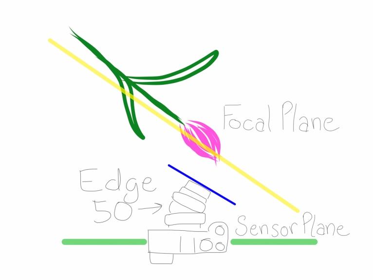 Levi_Sim Edge 50-2